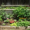 Looking great, Tomatoes, peppers, spinach, lettuce, bell peppers, eggplant, herbs