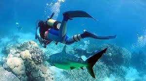 Making money is a lot like scuba diving (Weird)